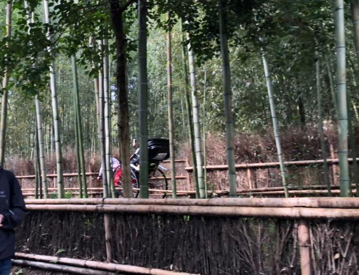 竹林の小径を進む人力車